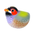 Uccello calamita per graffette - Piu Piu Arancione