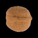 Walnut eraser - Noix