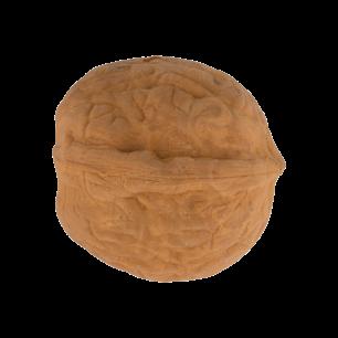 Walnuss-Radiergummi - Noix