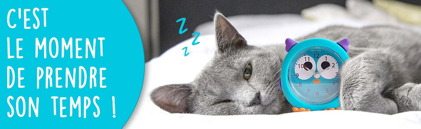 Chat avec un réveil