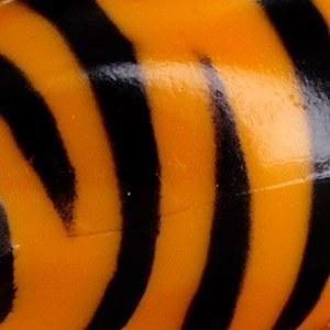 Zebre Orange