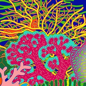Coral Rainbow